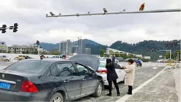 Фото №2 - Самое смешное ДТП века: автомобилистка приняла зад обезьяны за красный свет светофора — и дала по тормозам!