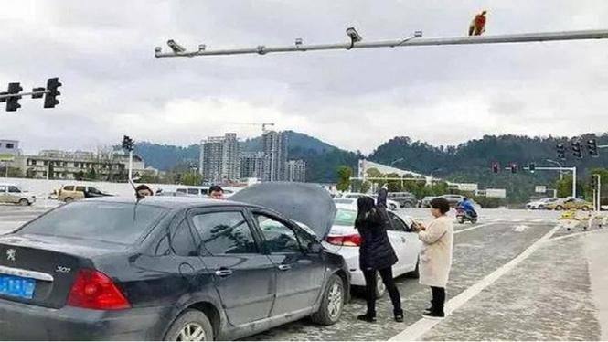 Самое смешное ДТП века: автомобилистка приняла зад обезьяны за красный свет светофора — и дала по тормозам!