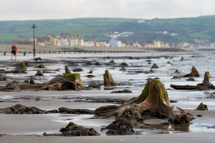 Фото №1 - В Уэльсе ураган сдул воду и обнажил доисторический лес с окаменевшими деревьями
