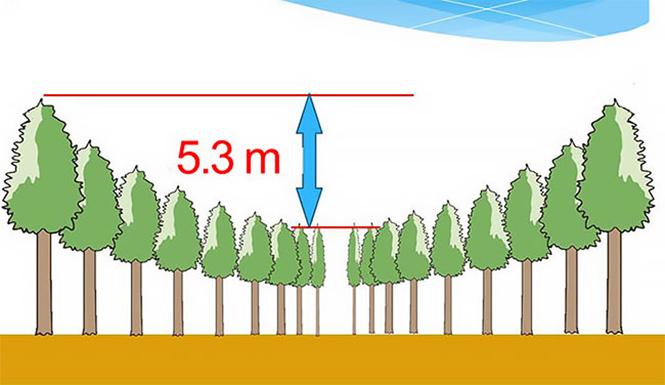 Фото №4 - Круглый лес, на выращивание которого японцы потратили 50 лет