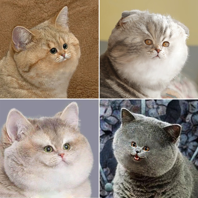Фото №7 - Коты с крошечными мордами!