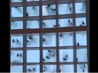 Сколько мух ты видишь в этом видео? Вирусная оптическая иллюзия