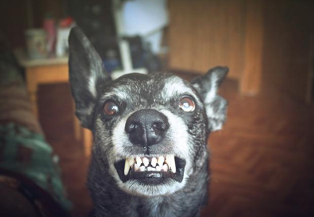 Фото №1 - Ученые выяснили, каких людей собаки кусают чаще всего