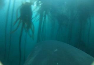 Вот как видит акулью охоту сама акула (хищное видео от первого лица)