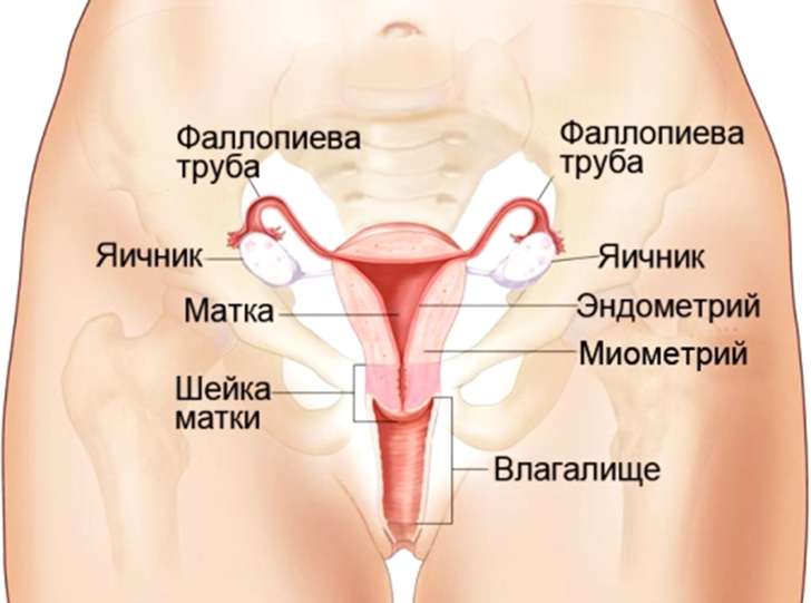 Фото №2 - Исследование показало: половина мужчин не знают, где находится влагалище!