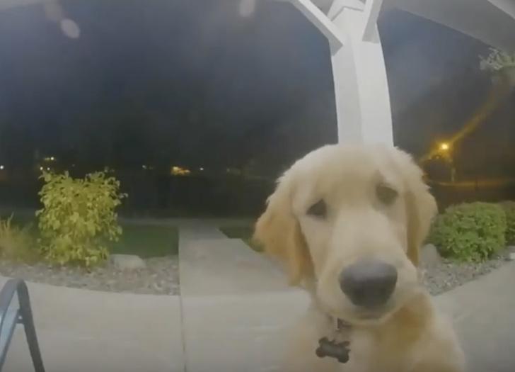 Фото №1 - Щенок вернулся с прогулки и позвонил в дверной звонок, чтобы ему открыли (видео)