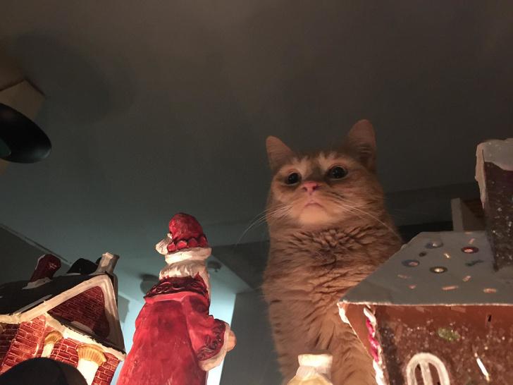 Фото №1 - Лучшие фотожабы на грозного новогоднего кота