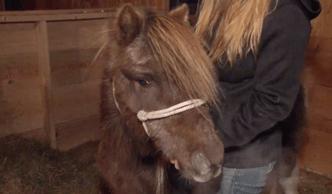 Фото №1 - Мир не без добрых людей: жители Мэна собрали $4000 на новый пенис для пони