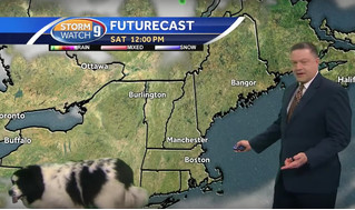 Умильное ВИДЕО: собака случайно заходит в кадр во время прогноза погоды