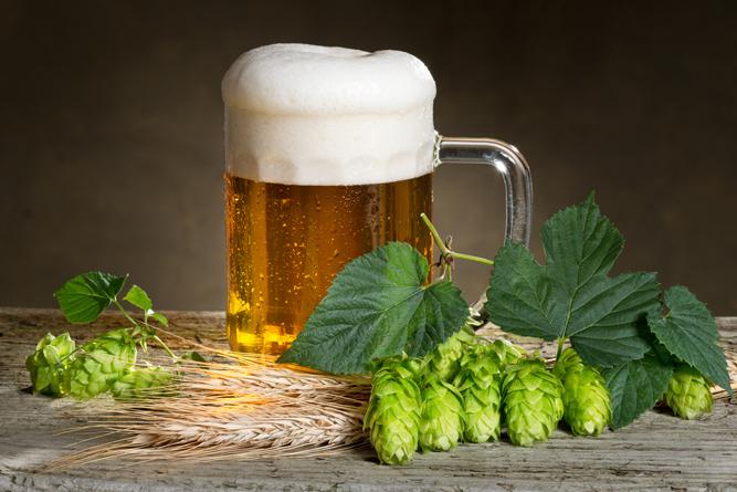 Фото №3 - 18 глупейших мифов о пиве