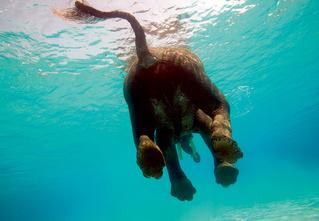 Слонопотамия. 13 фотоисторий из жизни слонов