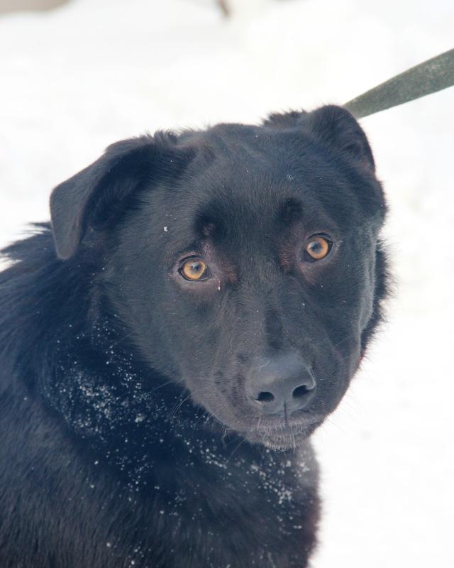 Фото №2 - Котопёс недели: возьми из приюта пса Бари или кошку Нури