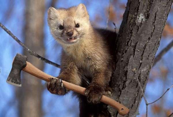 Фото №1 - Вооруженные до зубов (и клювов) животные! Очень смешная фотоподборка