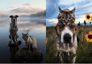 Генри и Балу: умопомрачительный «Инстаграм» о путешествиях кота и пса